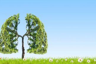 ماذا يحدث اذا لم يكن هناك اشجار من حولنا