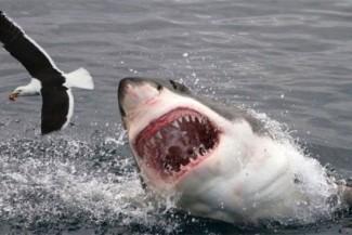 هل كنت تعرف هذه المعلومات عن سمكة القرش