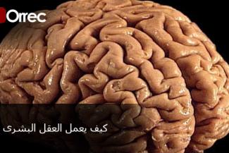 هل كنت تعلم هذه المعلومات عن العقل البشرى ؟