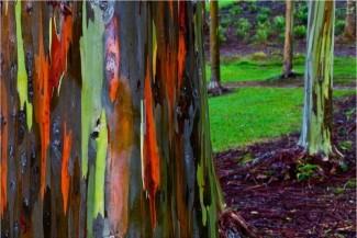 هل رايت أجمل شجره في العالم؟