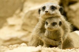 Motherhood in animal kingdom