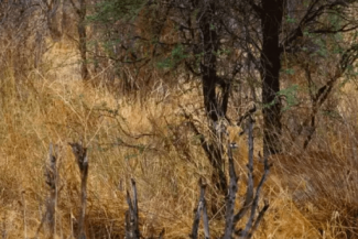 Can You Spot These Animals In Under 2 Minutes?
