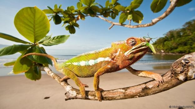 The truth about chameleons