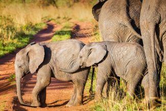 حقائق ممتعة عن الفيل: 17 معلومة مشوقة عن حياة الافيال ونظامها الاجتماعي