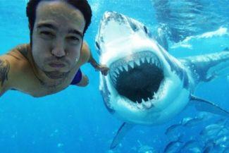 6 شواطئ مخيفة مشهورة بهجمات القرش الخطرة