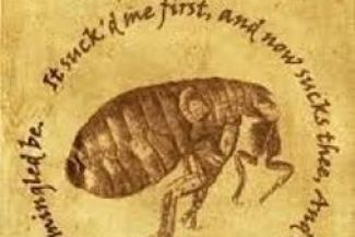 My Interpretation And Short Analysis of John Donne's (The Flea)