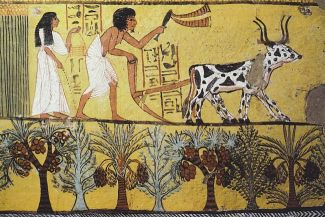 عادات الطهي واشهر الاكلات والاطعمة المصرية في مصر الفرعونية