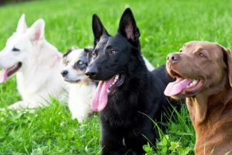What are the easiest dog breeds to train?