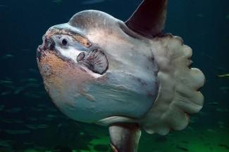 تعرف على اغرب  أنواع  وأشكال السمك فى العالم