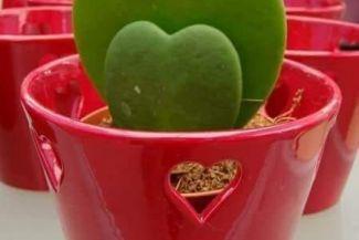 تعرف على كيفية زرع اجمل النباتات في شرفتك و حديقتك